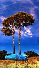 Parasols Meeting (Pierpol) Tags: blue two sky tree beach festival twins pin ciel parasol arbre plage pp interestingness80 i500 generouscomments pptgs