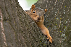 Young Squirrel III (James Marvin Phelps) Tags: animal photography james rodent backyard squirrel wildlife phelps mandj98