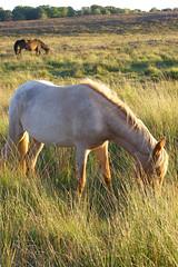 AnimalCalendar2007Aug (treehouse1977) Tags: sunset bird fauna wildlife champion jim hampshire pony ponies bog newforest mire fernycrofts yewtreeheath treehouse1977 jimchampion
