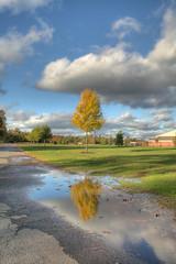 Tree-and-Reflection-far (jason_minahan) Tags: autumn reflection tree newjersey nj princeton hdr mercercounty xti