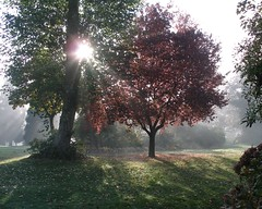 Let there be light (mylin) Tags: trees light red sun sunlight green grass leaves fog vancouver golf branches stanleypark 1on1 mylin allrightsreserved cotcbestof2006 ljomi