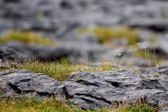 Burren, Lahinch - Clare (C) 2006 (thetrueview.com) Tags: ireland clare doolin burren munster davidreade thetrueviewcom irishphotographer dublinphotographer dublinphotography