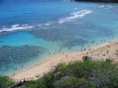 snorkeling at hanauma bay (myturtleneck) Tags: hawaii hanaumabay