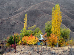 Colorful Garden (Hamed Saber) Tags: autumn red mountain color tree green fall yellow garden geotagged persian interestingness colorful iran persia hills saber villa mazandaran iranian  hamed farsi   flickrexplore    yoush       baladeh geo:lon=51536006 geo:lat=36235412