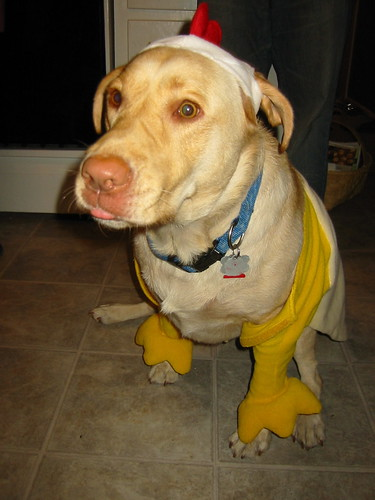 yellow lab - Halloween