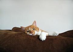 My Milo (kekyrex) Tags: cats pets animals kittens
