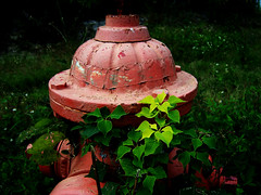 quotidian hydrant (getthebubbles) Tags: red plants green fall florida kodak firehydrant getthebubbles utatathursdaywalk28