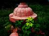 quotidian hydrant (getthebubbles) Tags: red plants green fall florida kodak firehydrant getthebubbles utatathursdaywalk28