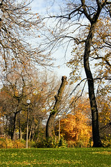 Truncated (Michael DaKidd) Tags: park autumn sunlight chicago tree nature daylight solitude afternoon gbrearview natural outdoor peaceful explore greenery leisure transition humboldtpark runt chicagoist boulevards stunted