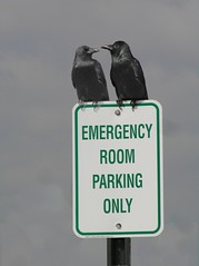 Parking (lynne bernay-roman) Tags: birds sign parking crows blackbirds