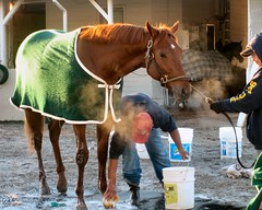 bath beauty (circulating) Tags: horses groom bath track kentucky louisville backside churchilldowns thoroughbred workouts breederscup firsthand thisisky