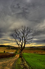 Hint of Malevolence (Magdalen Green Photography) Tags: tree green nature rural d50 ilovenature scotland cool dundee scottish iain remote tayside hdr ecosse malevolence specnature artlibre