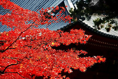 , Nikko, Japan (hk_traveller) Tags: trip travel autumn red vacation color green 20d yellow japan canon temple photo asia flickr canon20d traveller explore turbo  nikko    douban top500  turbophoto