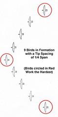 為何飛鳥要排成V字