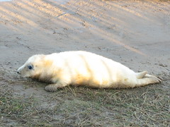Look at my tail (fuzzypurple) Tags: seals donnanook