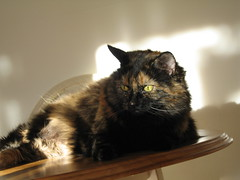 chat torti