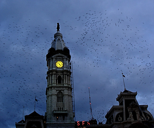 Swallows come home to roost at City Hall