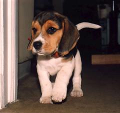 Jimi, mi perro - my dog