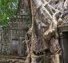 ANGKOR TEMPLES TREES (patrick555666751) Tags: angkor temples trees tree arbres arboles temple angkortemplestrees kampuchea asie du sud est south east asia cambodge cambodia flickr heart group cambodja camboja cambogia kambodscha camboya