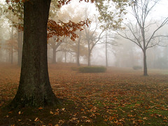 Burns Park in the fog
