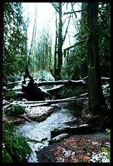 I was waiting all week for MN to look like this. (googoopanda) Tags: trees winter snow cold green creek forest washington rainforest evergreen fallen olympia brook oly tesc theevergreenstatecollege