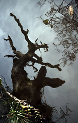 dead tree and other ghosts (Ray Byrne) Tags: reflection tree river searchthebest alnwick northumberland deadtree stump aln riveraln raybyrne abigfave byrneoutcouk webnorthcouk