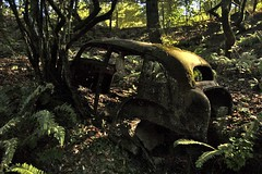 Hollowed out (p2wy) Tags: california car forest geotagged rust ferns colemanvalley p2wy