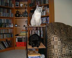 cats 01 (tashwayne) Tags: 2001 cats cat small alabama