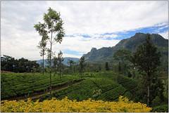 Hill Country (Mabacam) Tags: asia southasia srilanka ceylon island hillcountry tea plantations teaplantation teapickers nuwaraeliya highlands