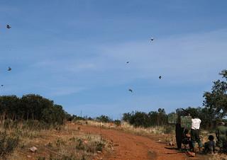 Spain Ibex Hunt & Driven Partridge Hunts 31