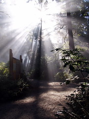 Sunrise (Seamus Murray) Tags: green nature oregon sunrise easter outdoors hope peace earth breath roadtrip calm explore believe oregoncoast 221 morningglory oswald earthday planetearth peopleschoice beautifulearth gogreen nypress timeforchange p1f1 superaplus aplusphoto wwfearthday maporegon extraordinarycompositions popsgallery earthday2008 earthdayearthday2008