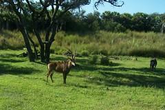 Safari (tiggerlove) Tags: bestnaturetnc06