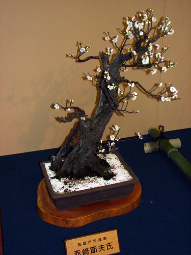 Plum bonsai